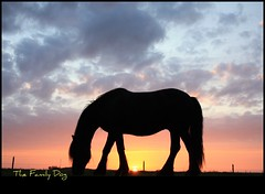 Promised Land (The Family Dog) Tags: sunset horse color silhouette caballo cheval tramonto ameland cavallo cavalo