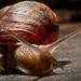 115. Snail