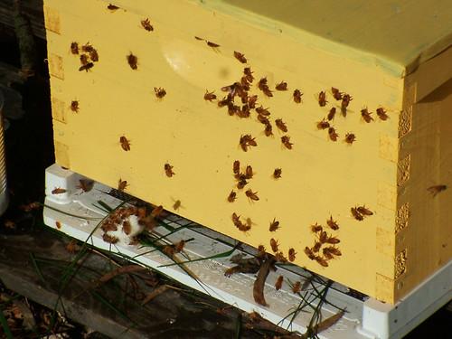 hive03