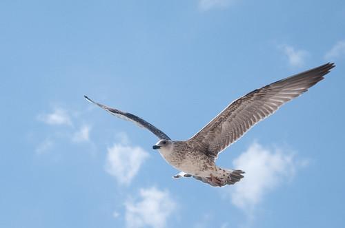 πουλι, φωτογραφια απο κρητη