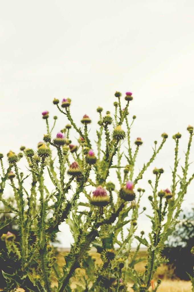 blog-weeds-2