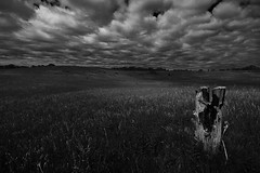 Champlin (L/\\\/RENCE) Tags: sky blackandwhite bw field grass minnesota clouds canon landscape log hill minneapolis treestump suberbs champlin rebelxti