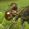 ~ DAMSEL FLeyes ~ (ViaMoi) Tags: dragonfly soe maur padda skordýr aplusphoto greenmonday viamoi dragonflyeyes