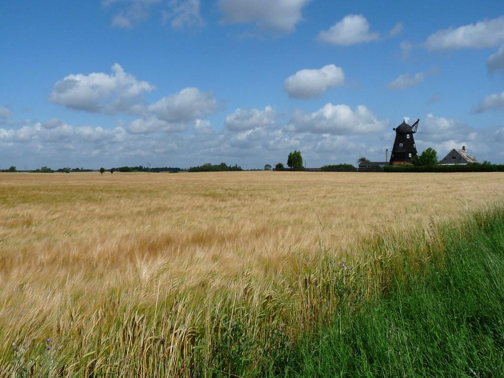 Billedresultat for sommer billeder fra danmark