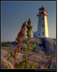Yep, you guessed it! :-) (Dave the Haligonian) Tags: ocean sunset sea sky canada clouds coast weeds nikon waves novascotia shoreline atlantic shore maritime wildflowers d200 nikkor peggyscove 18200vr copyrightallrightsreserved davidsaunders davethehaligonian yepyouguessedit nkn1645