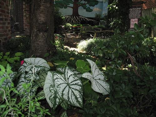 Street garden on Atlantic Avenue