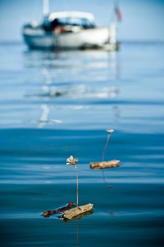Marble bay pooh sticks