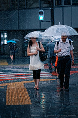 J-Girl in a rainstorm: Route 246 in Shibuya, Tokyo (Alfie | Japanorama) Tags: road street woman storm man cute girl lines rain weather yellow japan lady umbrella asian japanese tokyo nikon pretty pavement shibuya raindrops rainstorm thunderstorm raining puddles d300 route246 nikkor85mmf14afd umbrellasinjapan streetphotographyintokyo shootingincrazyweather photostakenintherain rainintokyo ladycarryinganumbrella