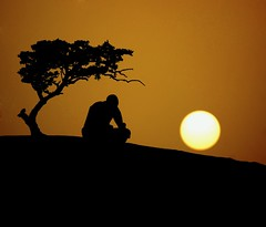 (`Anonymous) Tags: tree silhouette by sadness sad sony 300mm cousin alpha anonymous fahad qtr a350 sunsite almarri