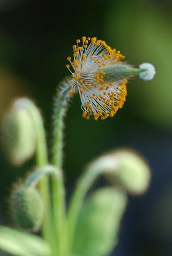 咲くやこの花館の花