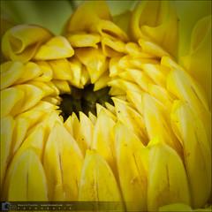 Flores-20090809-125806