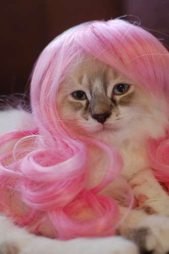 I like how this wig brings out the pink in my paw pads