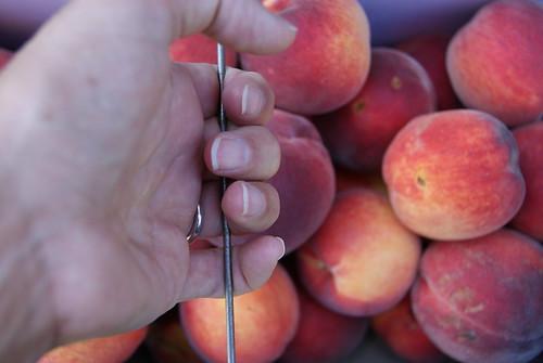 Aug 30th Peaches 018