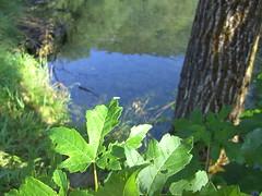 river (odblisa) Tags: river slovenië bohinjskabistrica