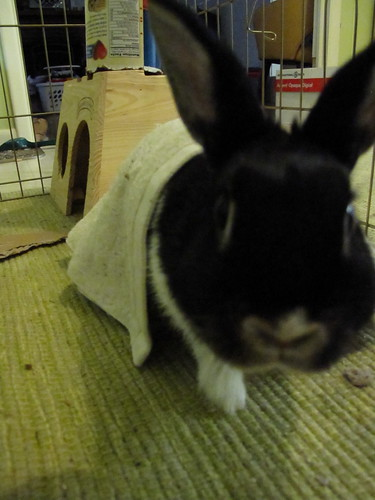Oreo the blankie bunny.