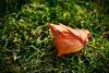Farewell Summer (ronmartblog.com) Tags: autumn fall leave maple renton 135mm coulonpark colorefex 7pointsystem sharpenerpro
