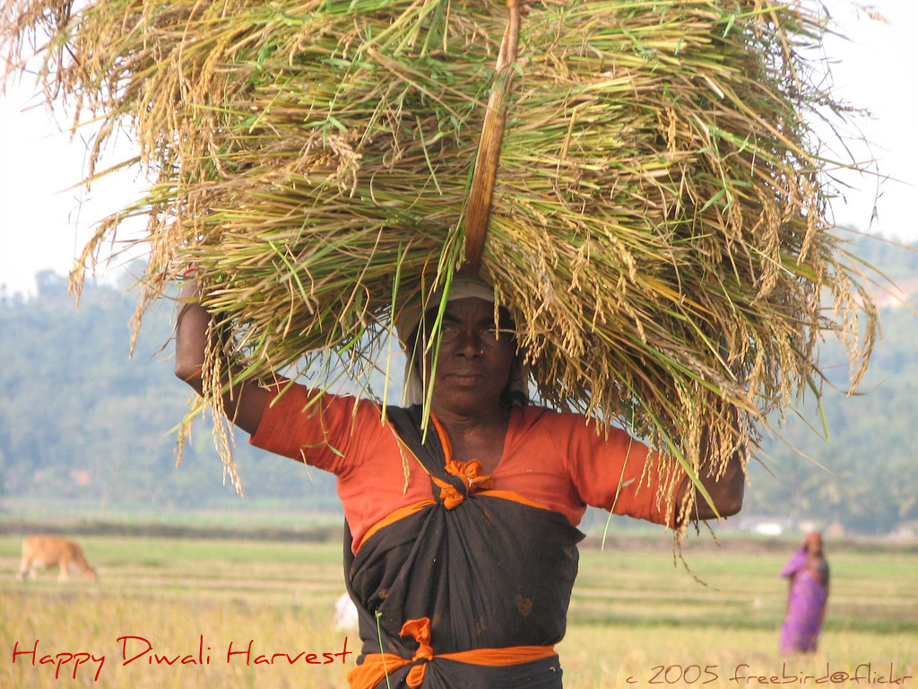 Diwali Harvest