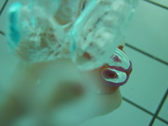 Little Fish #5 (Alison et Cedric) Tags: underwater powershot bubble bulle d10 waterquot quotunder