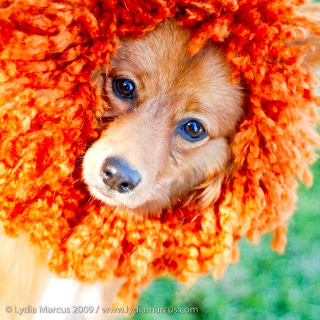 Haute Dog Howl'oween-12