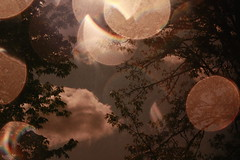 (Megan Caros) Tags: light sunlight tree sepia clouds dark crazy rainbow backyard bokeh megan explore noedit epic 109 modestmouse explored sooc missedtheboat meganalice