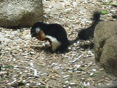 Squirrel at the zoo