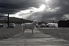 Camino de... (Torres Romanas) Tags: blancoynegro canon camino playa bn perro cielo canoneos400d dnae dnaetorres
