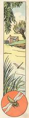 libellules et ruisseaux2