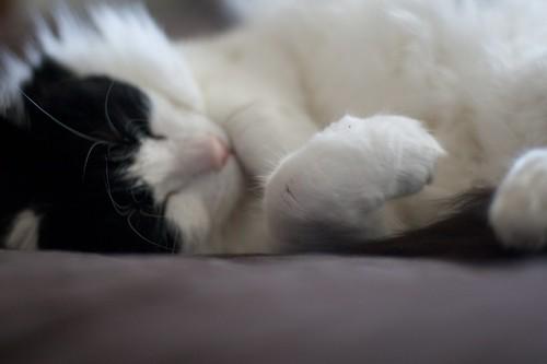 Riley napping