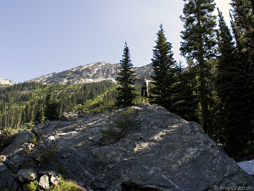 Spider Meadow 003