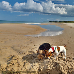 RUSTY AND JACK, A DAY ON THE BEACH. (Edward Dullard Photography. Kilkenny, Ireland.) Tags: ireland sea vacation sky cloud seascape beach dogs reflections landscape sand holidays aqua urlaub playa eire wexford vacanze jackrussel irlanda k9 terriers ierland platge curracloe aplusphoto edwarddullard kilkennyphotographers