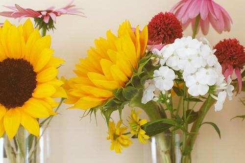 flowers 1 web