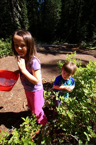 teagan and sequoia picking huckleberries at our campsite - _MG_9950