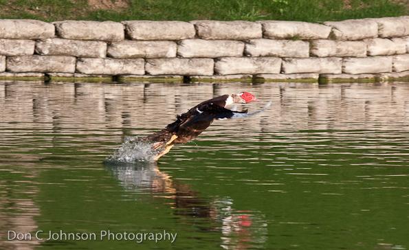 duckpond-107