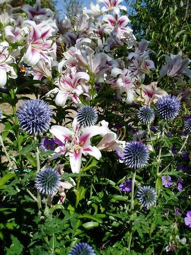 Lilium Contrast with Echinops