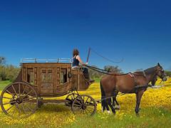 the chariot (jaci XIII) Tags: horses grass wagon bluesky cavalos stable relva cuazul charrete cocheira