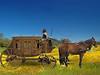 the chariot (jaci XIII) Tags: horses grass wagon bluesky cavalos stable relva céuazul charrete cocheira