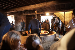 Cider Making Festival at Hamptonne