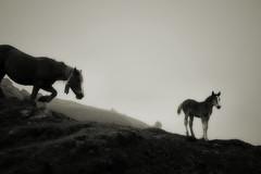 Jo vull que siguis gran (Ferran.) Tags: horse nature natura pyrenees cavall ripolles cavalls pardines jodegran pardinolandia