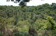 Srie Florestas Naturais - Natural Forest (jemaambiental) Tags: sky cloud horizon cu nuvem forests horizonte restinga mataatlntica tagssrieflorestasnaturaisnaturalforest