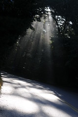 the sweetness and subtlety of the sun (HiCe) Tags: road morning light sunshine darkness rays stpeterssolfeggio