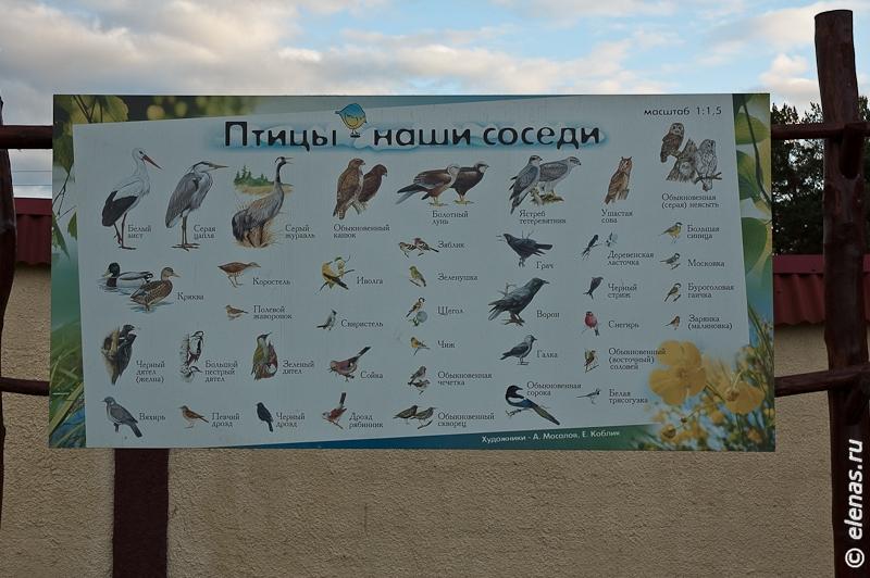 Плакат птиц, занесенных в красную книгу.