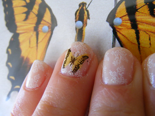 3996846079 2ebb3c6103 Butterfly nail art   Special Mancure trends with perfect decrations