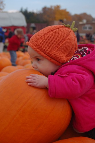 Violet With with Pumpkins 2