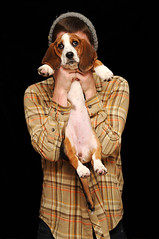 170/365 11/24/2009 (Travis Cuykendall) Tags: orange dog brown white black cute puppy nikon hound adorable basset backdrop 28 nikkor plaid 170 1755 d300 sb800 365days strobist