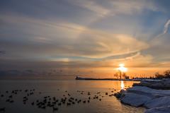 sundownflock-9396 (Joe Follest Photography) Tags: winter sunset ice duck ducks halo sunhalo follestphotography joefollest