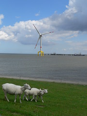 Bard VM (offshore) and sheeps (perspective-OL) Tags: sea energy wind offshore north bard nordsee turbine sustainable renewable wea maritim vm hooksiel