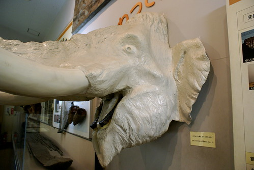 ナウマンゾウ博物館