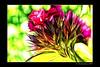 Retina Burner (Thomaniac) Tags: flowers white abstract macro art yellow closeup canon eos spring natur blossoms violet blumen lila gelb weiss nahaufnahme frühling blüten redfield efs60mmmacro lens00025 450d fractalius thomaniac