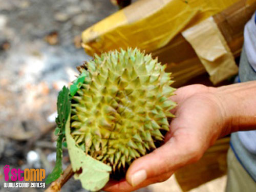 Psst! Here's the secret of where to get durians in S'pore -- FREE