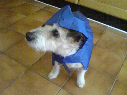 Taz the hoodie